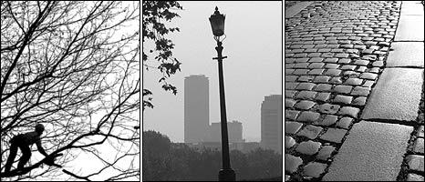 Tree, lamp-post and granite setts