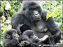 Gorilla family (Image: WildlifeDirect)