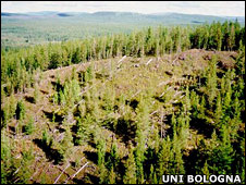 Felled trees at Tunguska (University of Bologna)