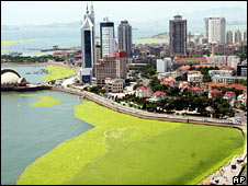Aerial view of the algae on 26 June 2008