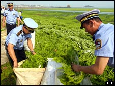 Officials help remove algae from coastal areas in Qingdao on 26 June 2008