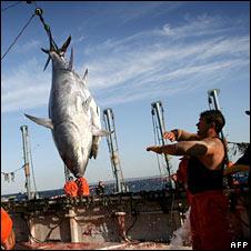 Tuna caught