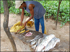 Man selling fish in Malindi