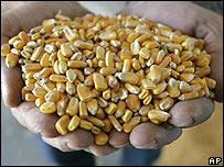 Manos con maíz