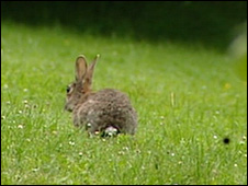 A rabbit in Germany