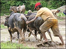 Ploughing in Acham district