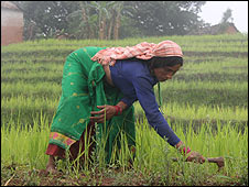 Nepalese woman tends crops
