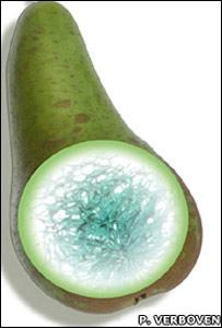Pera (P. Verboven)