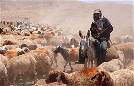 A herder in the Jordan Valley