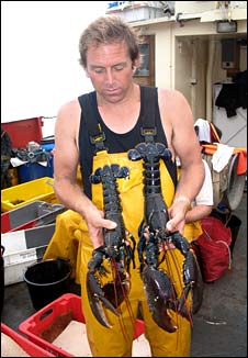 Miles Hoskin with lobsters