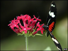 Heliconius Charitonius is seen in the butterfly exhibit at the National Biodiversity Park near Heredia, Costa Rica