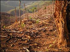 bbc deforestation