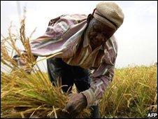 A farmer in Burkina faso