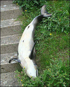 The dead dolphin in the garden