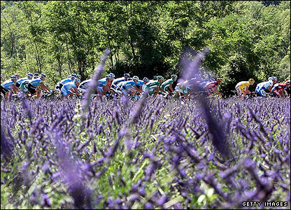 The peloton passes a lavender field