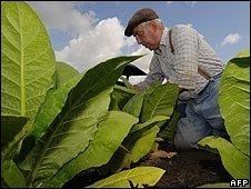 European tobacco farmer