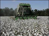 Agricultor de EE.UU. en un campo de algodón