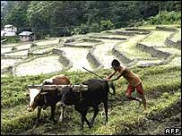 Campesino en India