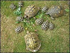 Stolen tortoises