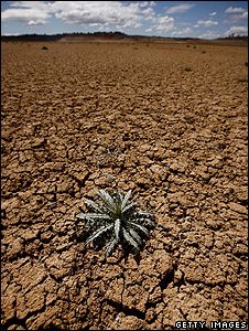 Lone plant in dried-out swamp (Getty Images)