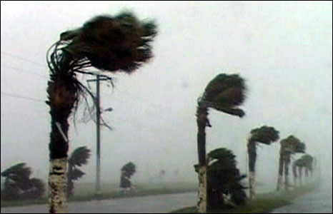 Pal trees battered by high winds as Hurricane Dolly heads inland, 23 July 2008