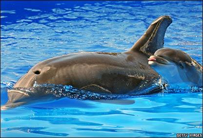 Delfín mular y su hijo