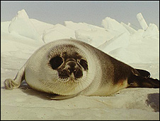 Seal (file pic)