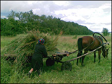 Traditional Russian farming