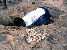 Boys gathers turtle eggs (photo: Traffic/WWF)