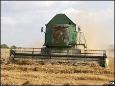 Combine harvester gathers crop (PA)