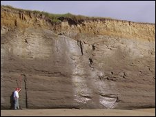 Cliffs in New Zealand where fossils were found