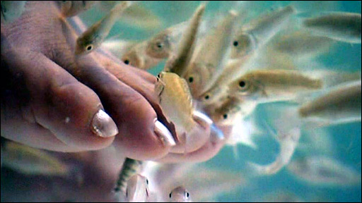 Bbc news americas 39 fish pedicure 39 a feet treat for Fish eating dead skin pedicure