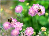 Abejas forrajeando en flores