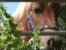 Daisy the rescued pony