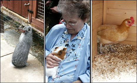 Christine Creighton and animals on the pet farm