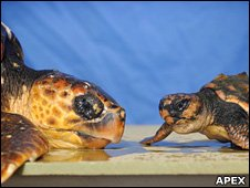 Blue Reef Aquarium Turtles