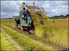 French farmer harvests flax