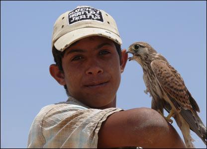 Joven palestino con un halcón