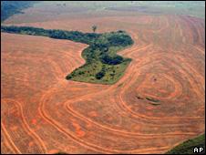 Deforestation (Image: AP)