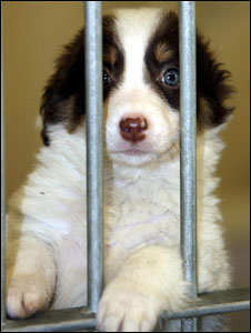 An unwanted puppy (library picture)