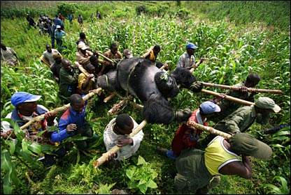 Brent Stirton, Getty Images for Newsweek