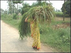 Woman carrying millet.
