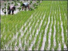 Farmers in Nanjing