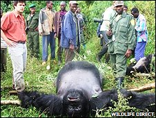 Emmanuel and Innocent with massacred gorilla (Image: WildlifeDirect)