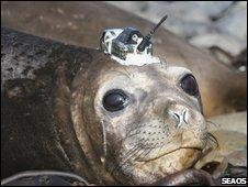 Seal(SEAOS)