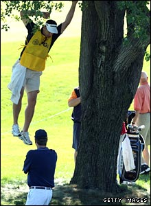 Bob Estes' caddie, Bill Izer, jumps from a tree after searching for a ball