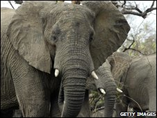 Elephant in Zimbabwe. File photo