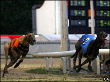 Dog race at Walthamstow greyhound track