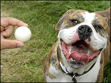 Louis and the golf ball (Pic: PDSA/PA Wire)