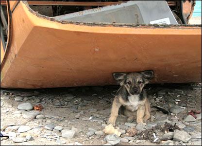 Полагается ли домашним животным гуманитарная помощь?
